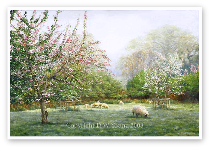 Orchard Blossom The Tamar Valley print enlargement