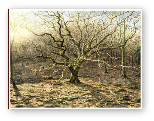 The Oak painting by David W Young