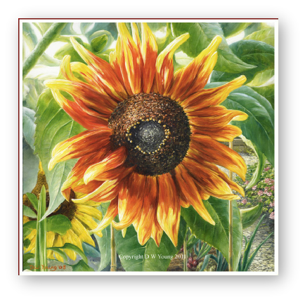Sunflower painting by david William Young