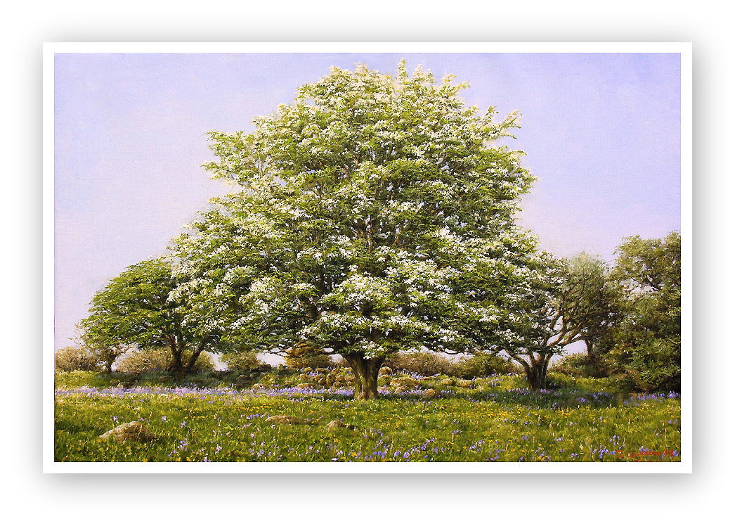 May Blossom, a Dartmoor Spring painting
