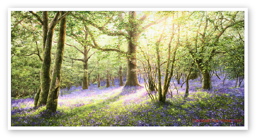Painting of Bluebell Woods, Dartmoor by David Young