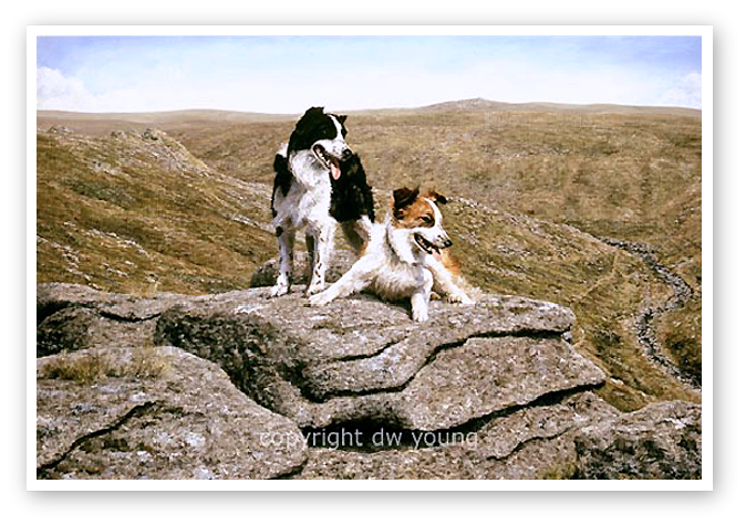 Well Earned Rest (collies), Tavy Cleave, Dartmoor print enlargement
